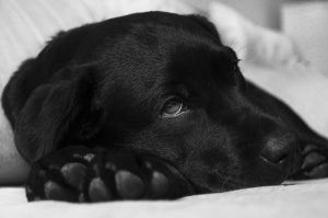 Benadryl For Dogs: Dosage, Side Effects and More
