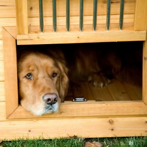 Dog Houses Thumbnail