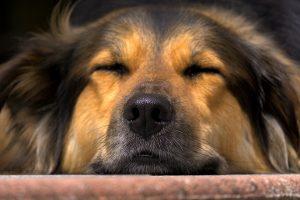 Buprenorphine For Dogs   Veterinary Place